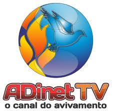 ADInet TV Ao Vivo